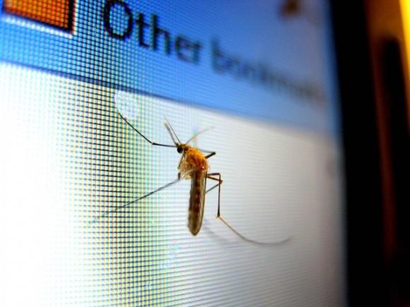 パソコンのモニターにくっついた蚊