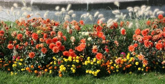 リボン花壇