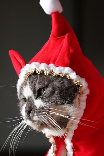 クリスマスねこ