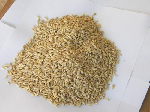 大麦で食物繊維を摂ろう!でもその方法って?