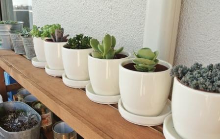 100均植木鉢